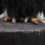 Die Krallen des Adlers