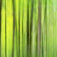 Grastränke abstrakt I