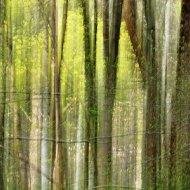 Grastränke abstrakt VI