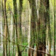 Grastränke abstrakt V