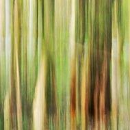 Grastränke abstrakt III