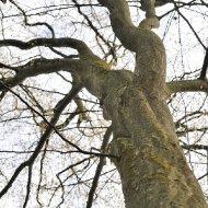 Baum an der Grastränke im Frühling