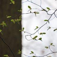 Schwarz und Weiss und Frühlingslaub