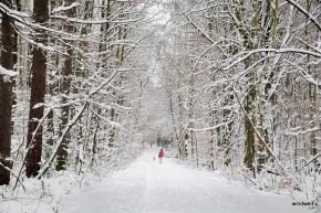 Winterstadtwald