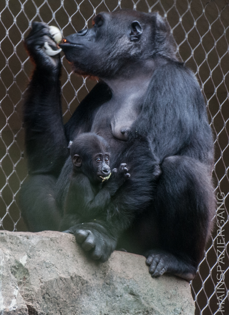 Sawa mit Mama