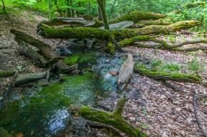 Stadtwaldspaziergang