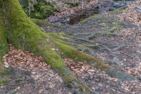 Lauter Bäume im Stadtwald ;-)