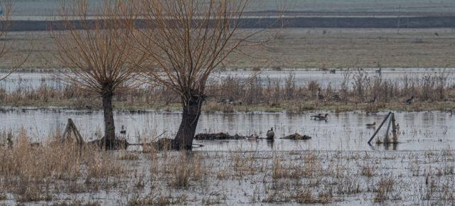 Das Bingenheimer Ried im Vorfrühling